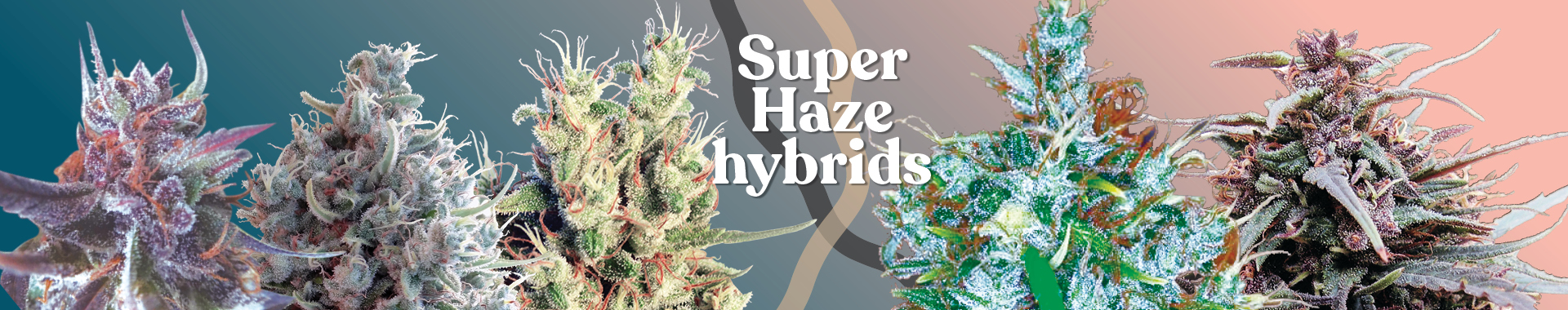 Breeders Pack