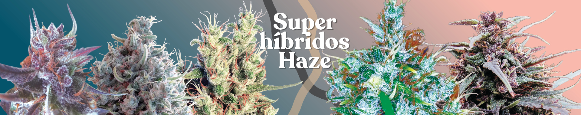 Packs de cría